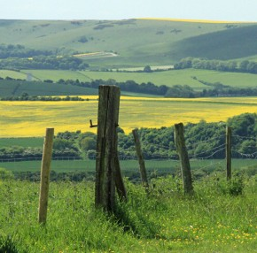Yoga Holiday in East Sussex